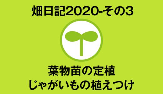【畑日記2020-その3】葉物苗の定植・じゃがいもの植えつけ