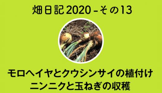 【畑日記2020-その13】モロヘイヤとクウシンサイの植付け・ニンニクと玉ねぎの収穫