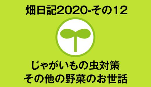 【畑日記2020-その12】じゃがいもの虫対策・夏野菜のお世話