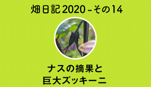 【畑日記2020-その14】ナスの摘果・巨大ズッキーニ