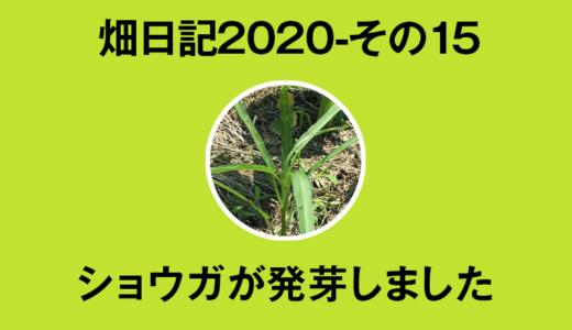 【畑日記2020-15】ショウガの発芽