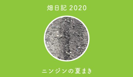 【畑日記2020-17】ニンジンの夏まき(黒田五寸・Dr.カロテン5)
