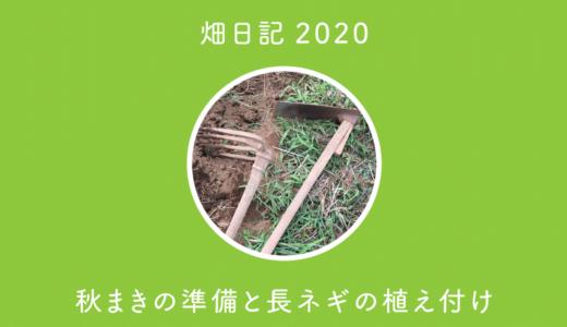 【畑日記2020-18】秋まきの準備と長ネギの植え付け